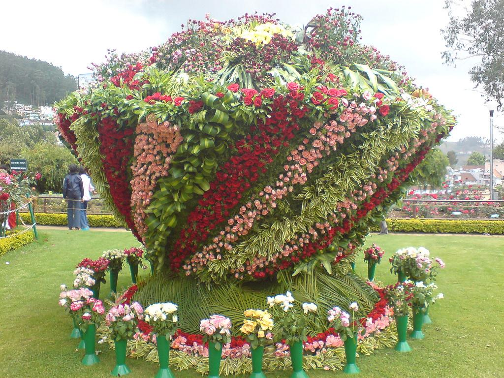 Complete Tourist Guide For Ooty